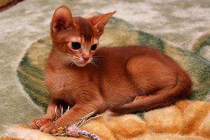 Kitten Color Correlate