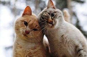 Pisici fără purici