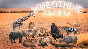 Animale exotice în Africa