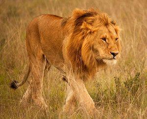 Animale care trăiesc în Africa