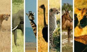 Animalele africane