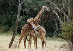 Ce animale trăiesc în Africa
