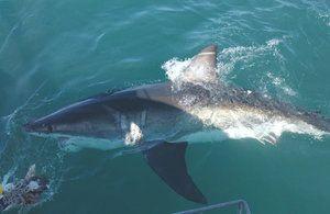 Mako Shark Speed Attack