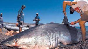 Pescarii care au prins mako