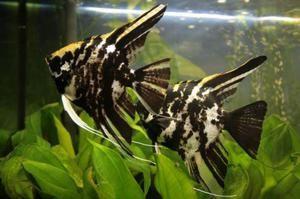 Scalatorii pentru acvariu