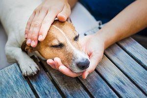 Alergii la câini: simptome, diagnostic, tratament, prevenire