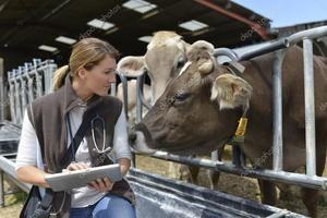 Tratamentul bovinelor mari