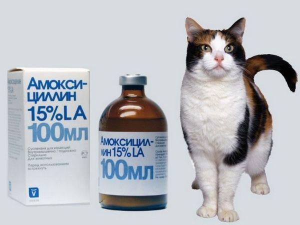 Suspensie de amoxicilină