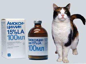 Amoxicilina pentru suspensie de pisici