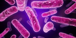 Gram-pozitive bacterii