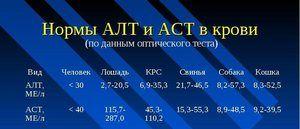 ALT și AST - ce înseamnă aceste cifre