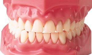Tipuri de dinți