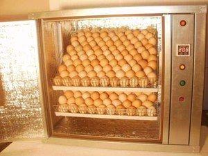 Incubatorul automat - ceea ce este