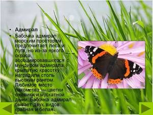 Butterfly Admiral: descriere, formă vernală, caracteristică speciei