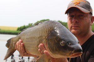 Descrierea cupidului alb de pește