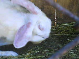 Preparate pentru tratamentul iepurilor