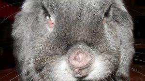 Tratamentul iepurilor