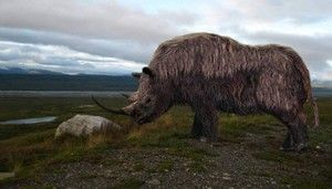 Worry rhinoceros-habitat