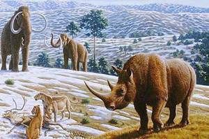 Rinocer de lână - animale preistorice