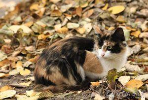 Întâlnire cu o pisică cu trei culori - pentru noroc