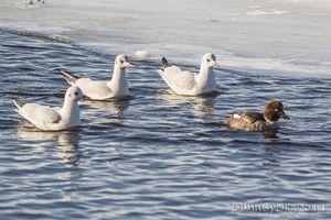 Păsări în timpul iernii