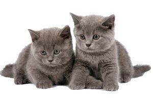 Hrănirea pisicilor este o dietă bine gândită