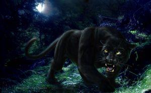 Deci cine este panterul - un leopard sau un jaguar?
