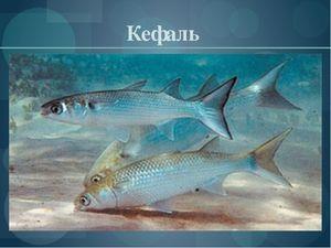 Descrierea peștilor