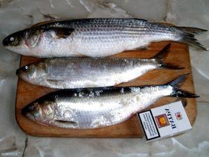 Gătitul de pește