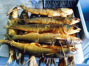 Reguli pentru stocarea peștelui