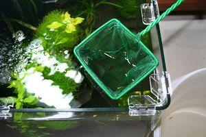 Curățarea acvariului la domiciliu