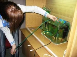 Cum să curățați acvariul