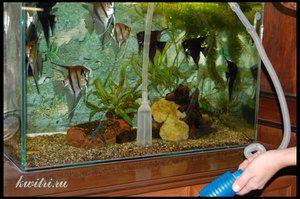 Cum să curățați acvariul singur