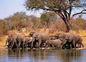 Unde locuiesc elefanții