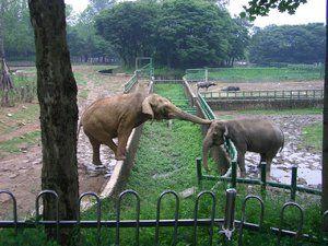 Ce elefanti mananca in natura