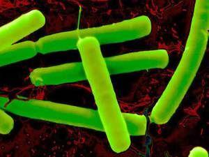 Cum să tratați bacteriile anaerobe