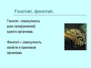 Care este fenotipul