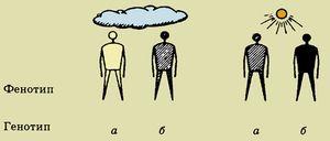 Diferența dintre genotip și fenotip