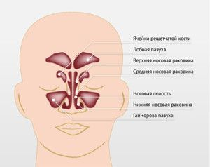 Unde sunt sinusurile paranasale