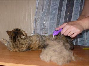 Cat Furminator