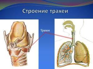 Patologia traheei