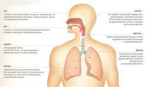 Anatomia umană