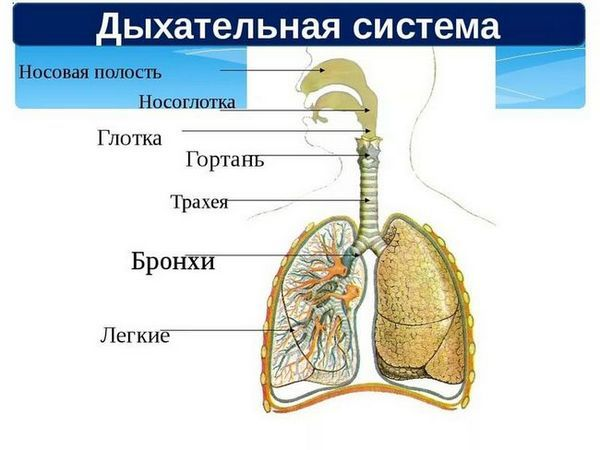 Tratamentul traheei