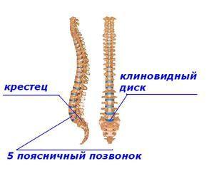 Lombosacral coloanei vertebrale