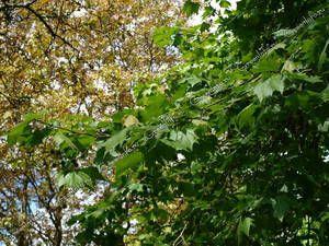 Arbore copac în pădure