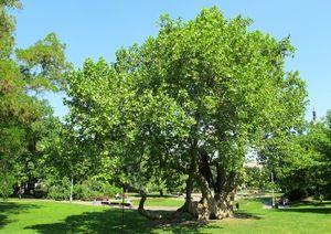 Descrierea arborelui
