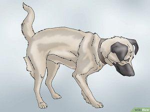 Displazia articulațiilor unui câine