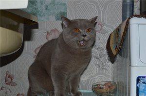 Vârsta pisicii