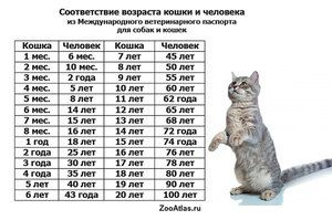 Până la ce vârstă crește pisica?