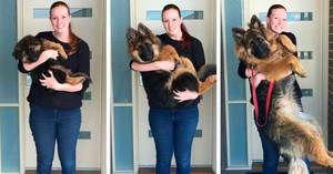 Până la ce vârste cresc câinii, dezvoltarea fiziologică